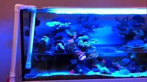jaime reef tank half empty